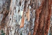 Bark texture of a tree trunk being destroyed by insects poster