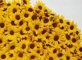 Sunflower Ridge