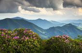stock photo of appalachian  - Blue Ridge Appalachian Mountain Peaks and Spring Rhododendron Flowers Blooming along the Appalachian Trail in Western NC