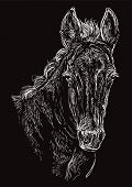 Cute Pony Foal Portrait. Young Pony Head In White Color Isolated On Black Background. Vector Hand Dr poster