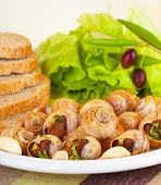 stock photo of escargot  - Tasty prepared escargot with fresh green lettuce salad - JPG