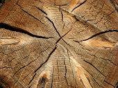 Tree Log Section