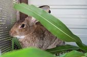 picture of rabbit hutch  - Rabbits eat corn leaves in the cage - JPG