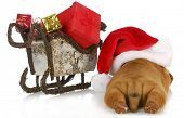 christmas puppy - dogue de bordeaux puppy wearing santa hat laying beside sleigh full of presents  isolated on white background