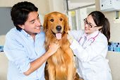Dog at the vet with his owner and the doctor
