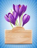 Wooden Sign und Frühling Blumen Krokus auf blauem Hintergrund mit Strahlen