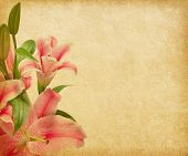 Beige paper background with lilies.