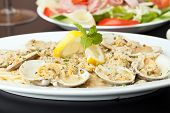 image of clam  - Italian pasta dish with fresh clams over pasta with herbs and cheese. Shallow depth of field.