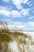 stock photo of gulf mexico  - Siesta Key Beach is located on the gulf coast of Sarasota Florida with powdery sand. Shallow depth of field with focus on the grasses.