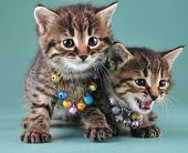 Little Kittens With Small Metal Jingle Bells Beads