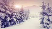foto of fantastic  - Fantastic evening winter landscape - JPG