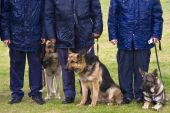 Police Officers With Dogs On A Rainy Meadow.