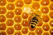 pic of honeycomb  - Bees work on honeycomb macro close up