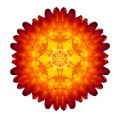 Kaleidoscopic Strawflower Mandala Isolated On White
