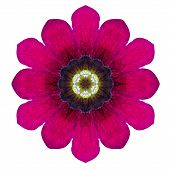 Purple Kaleidoscopic Flower Mandala Isolated On White