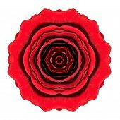 Kaleidoscopic Red Rose Flower Mandala Isolated On White