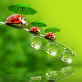 image of ladybug  - Funny picture from nature - JPG