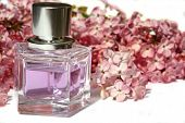 picture of perfume bottles  - lilac scented perfume - JPG
