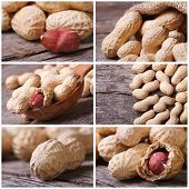 Set Of Six Peanut Close-up Photo