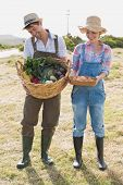 Full length of a smiling young couple with vegetables standing in the field