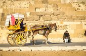 Horse cart in Giza, Egypt