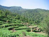Himalaya Padi Fields