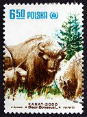 Postage Stamp Poland 1981 European Bison