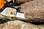 stock photo of man chainsaw  - Man sawing a log in his back yard with orange saw - JPG