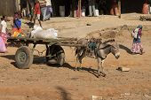 Donkey With A Cart