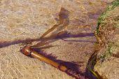 Bull Kelp Washed Ashore