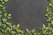 image of elm  - Chalkboard framed in slate effect of elm branches - JPG