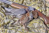 Culver (wood Pigeon) And Hazel Grouse - Hunting Trophies
