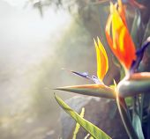 Beautiful flower growing in tropical rain forest
