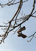 Old Shoes Hung From A Tree