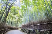 The Bamboo Grove In Arashiyama