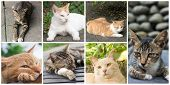 Collection of cat on the street in daytime.