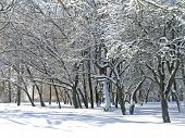 Trees covered with snow and ice