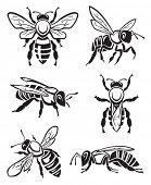 monochrome design of six bees