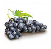 Ripe grape on white  background. Vector eps 10.