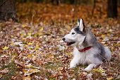 dog on autumn walk