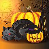 picture of spiderwebs  - Sleeping cat pumpkins spiderweb and broom in the basement before halloween - JPG