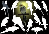 illustration with parrots isolated on black background