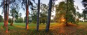 Panoramic View Of Forest,