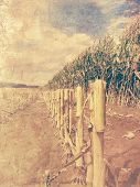 Retro corn field - arable land picture with old photo effect