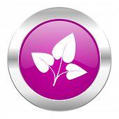 leaf violet circle chrome web icon isolated