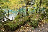 Lindeman Lake Hike On A Windy Day