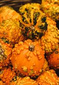 Colorful Pumpkins. Halloween Pumpkins
