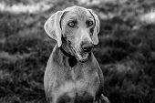 Black and white dog portrait