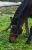 Close up shot of a horse grazing