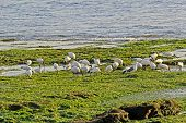 Ibises And Seagulls